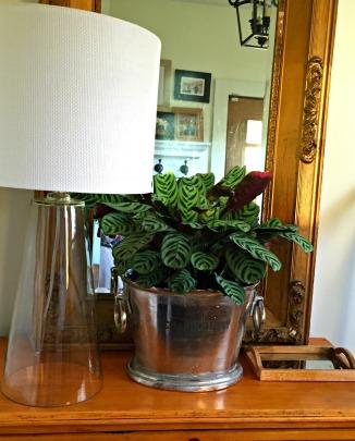 foyer plant
